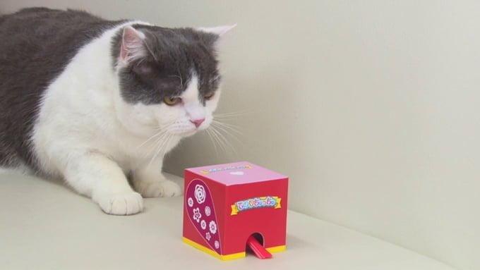 猫の動画のキャプチャ